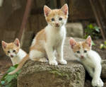 Best kitty buds2