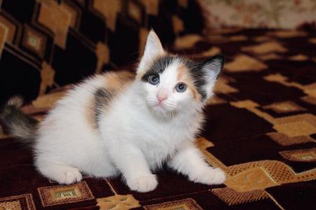 Iris kitten by ChesneyCat