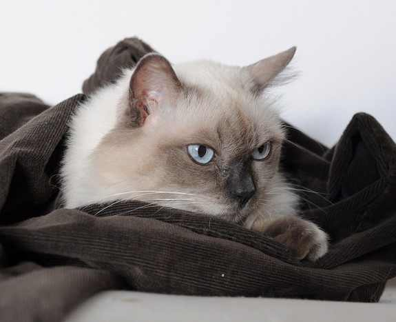 Cozy blue by ChesneyCat