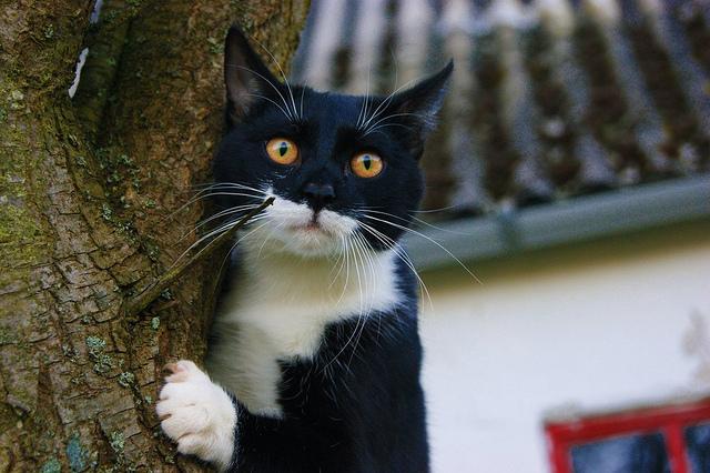 It's a cat life by Deamuus