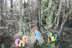 Ponies At The Woodlands