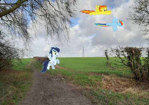 Ponies Flying At The Field