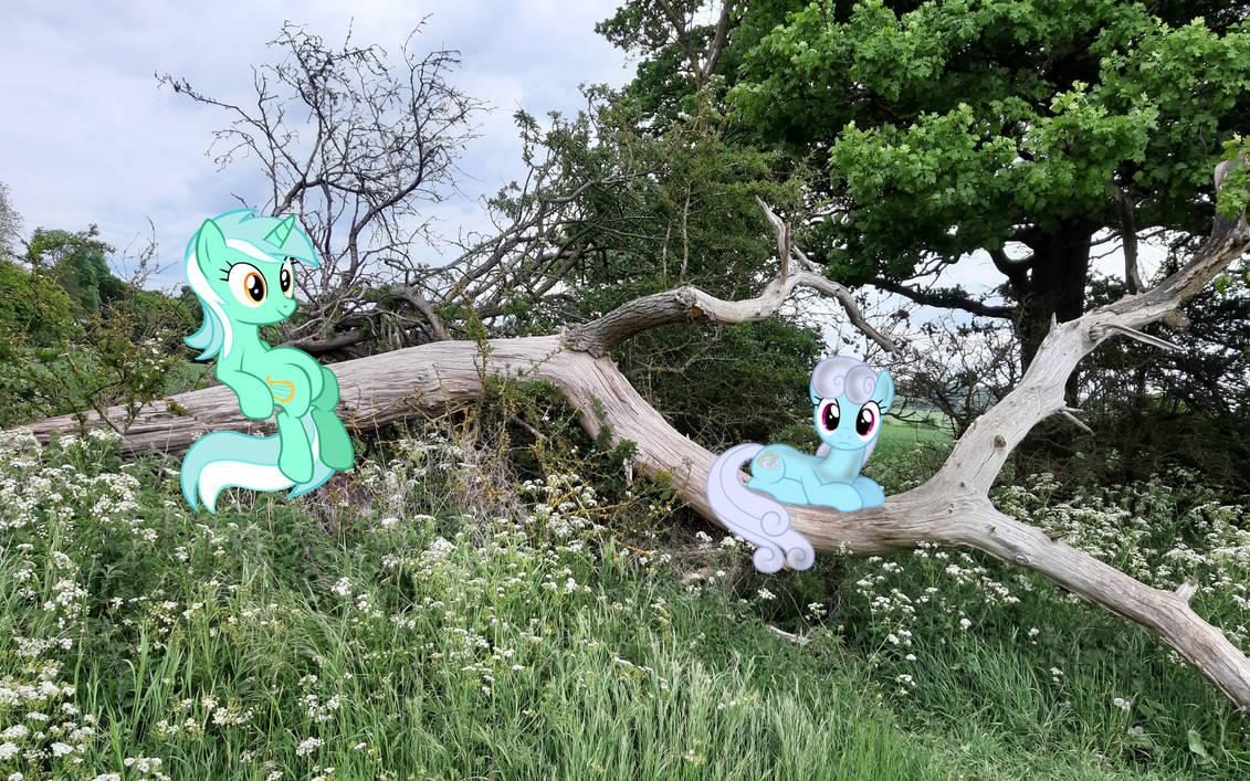 Lyra And Shoeshine Tree Sitting