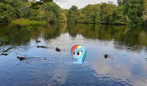 Dashie And The Ducks