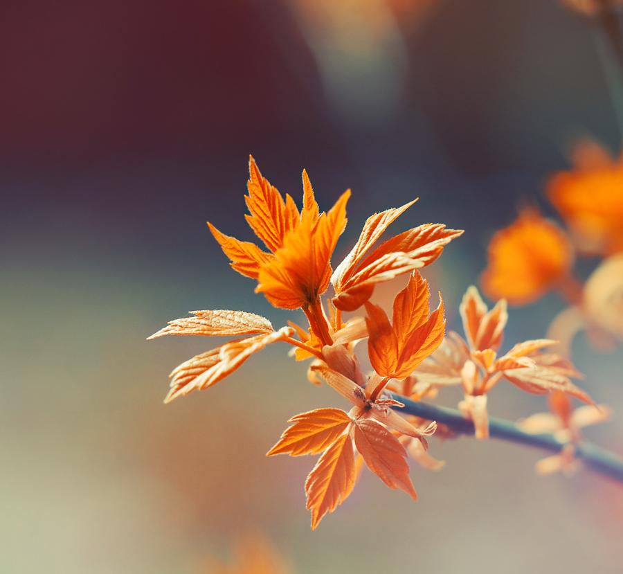 Orange by Tamerlana