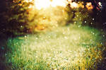 Magic spring by Tamerlana