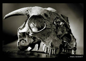 Skull by Albertomono