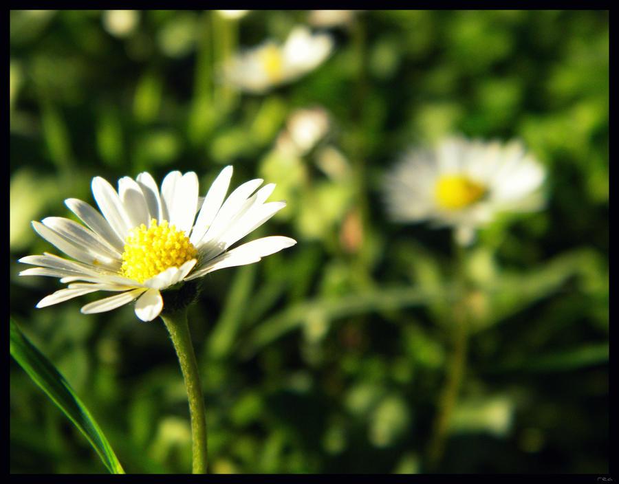 Feel the spring by Tharwaithiel