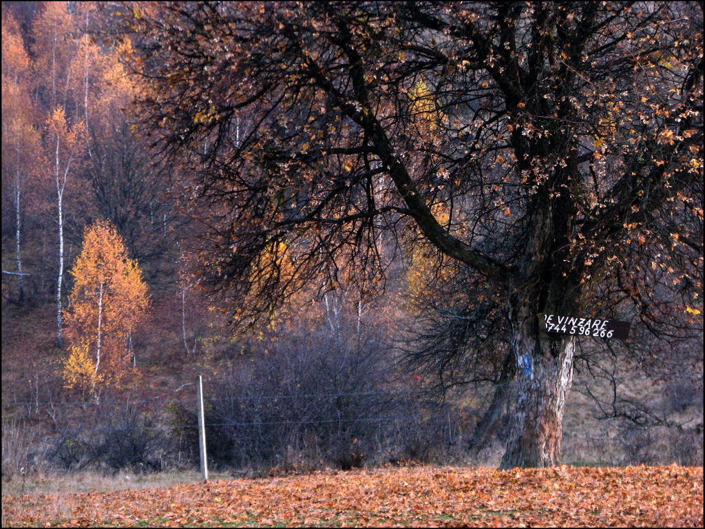 Autumn For Sale by Knon