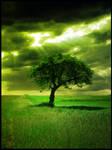 Sunlight through Green