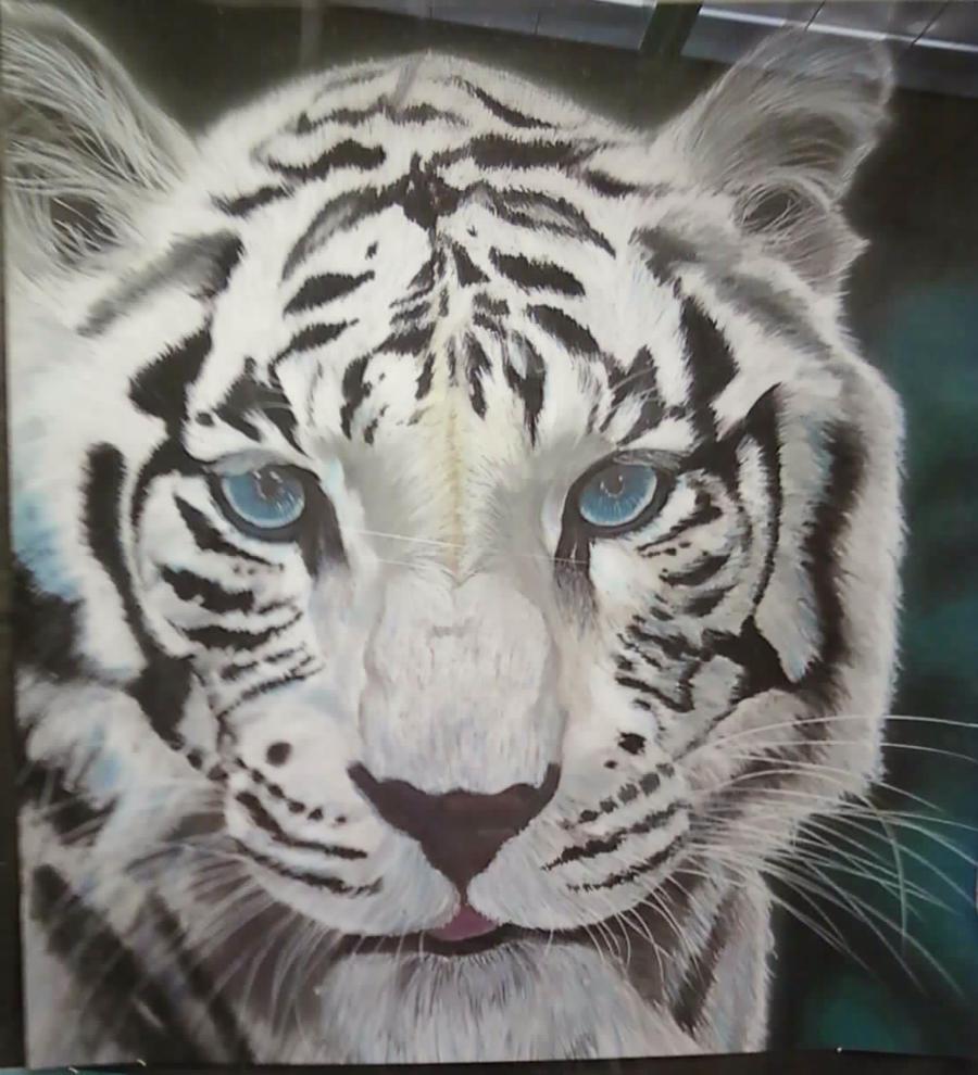 Chinese White Tiger Drawings White Tiger Drawing WhiteWhite Tiger Drawings