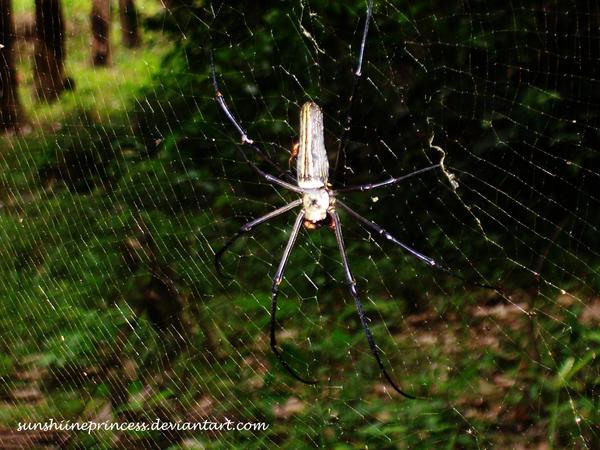 spider by SunshiinePrincess