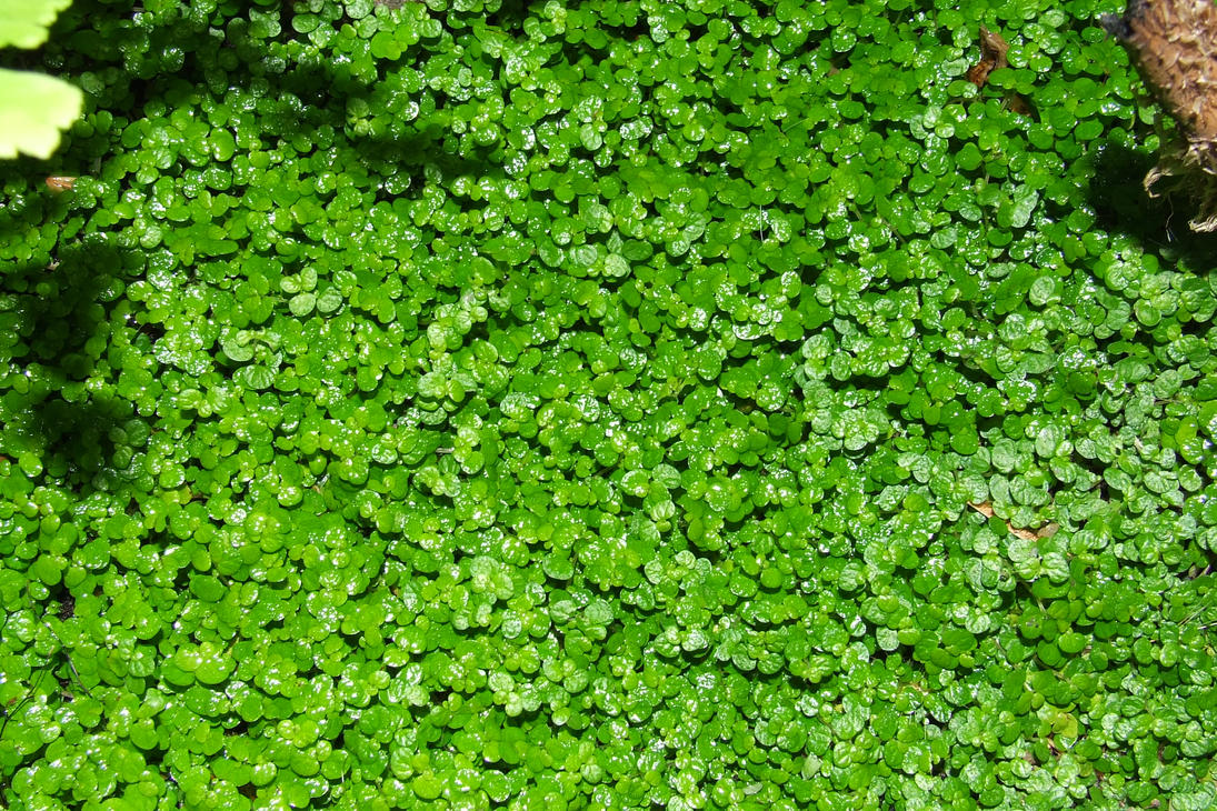 Ground Cover 1 by xistor on DeviantArt