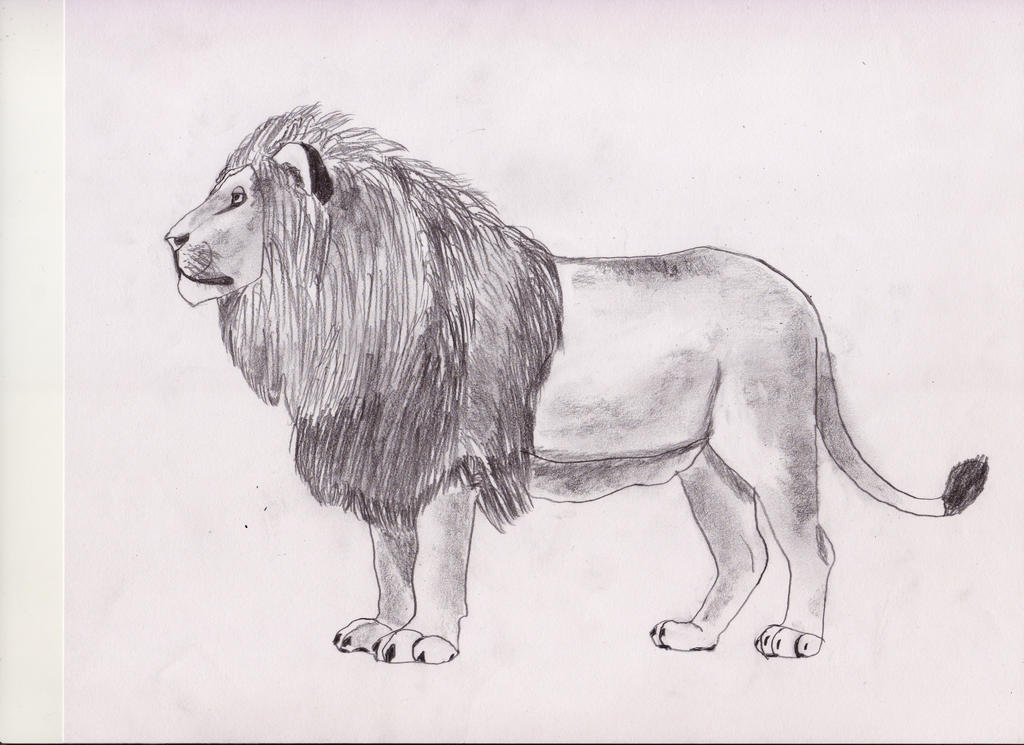 Lion Full Body By Phillip Neumeier On Deviantart