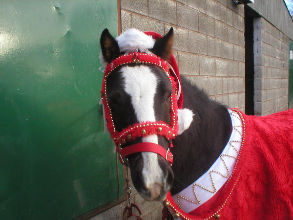 7 Horses Dressed Up for the Holidays | HORSE NATION