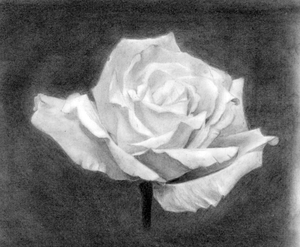 Flower 5 by IYIaglin