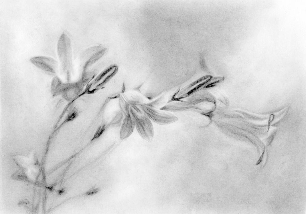 Flower 6 by IYIaglin