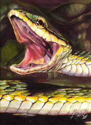 Serpent... by Aerhalev