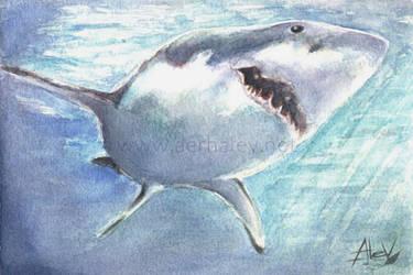 Shark by Aerhalev