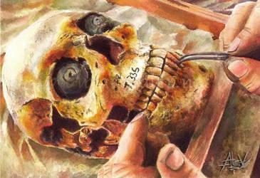 Skull by Aerhalev