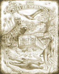 Silver Springs Poster Drawing