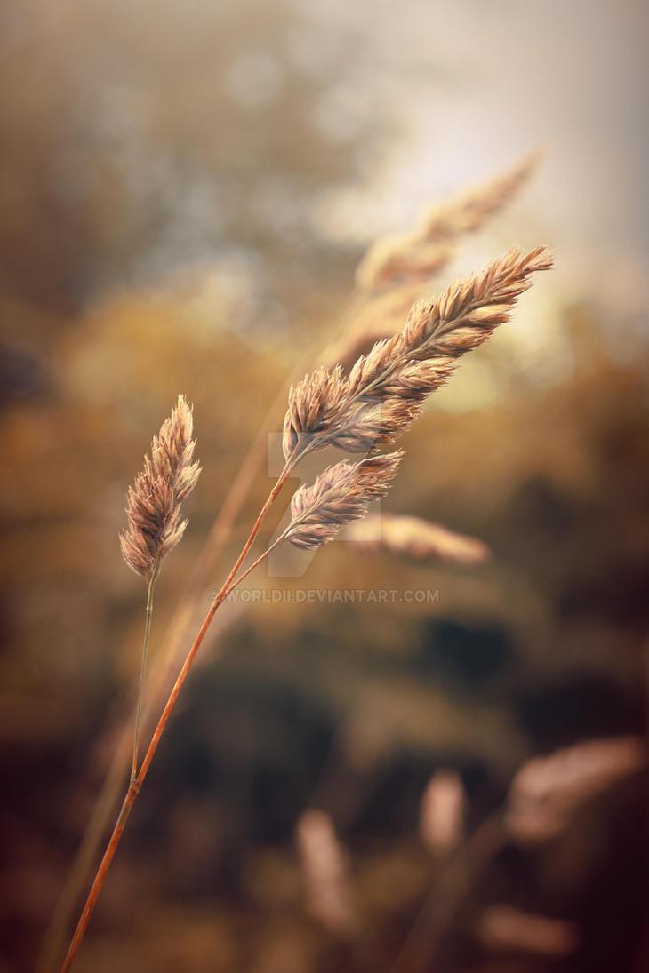 Summer Grass by WorldII