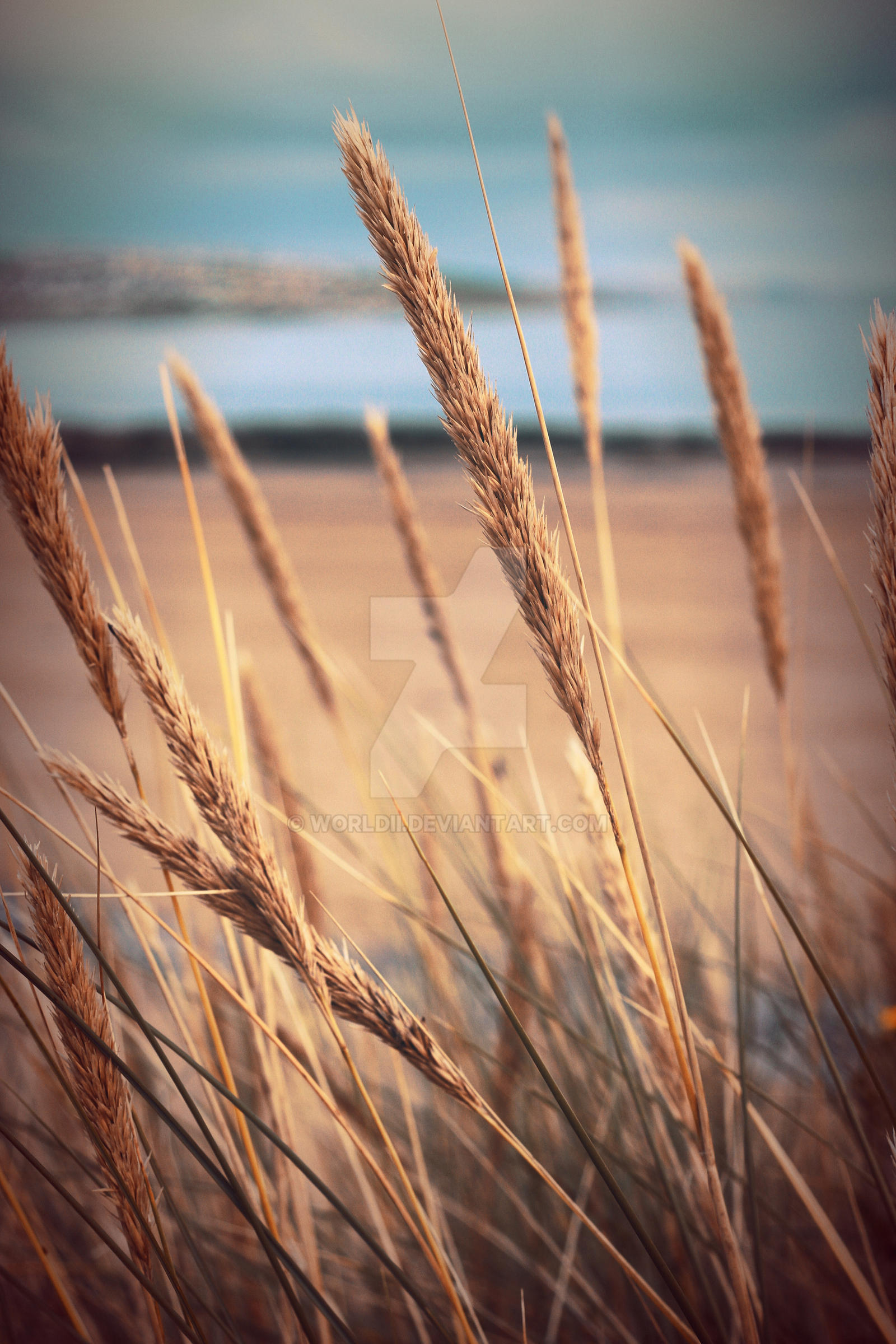 Beach Grass by WorldII