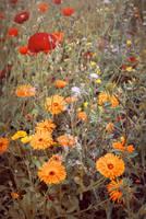 Wild Flowers by WorldII