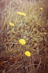 Late Summer Meadow by WorldII