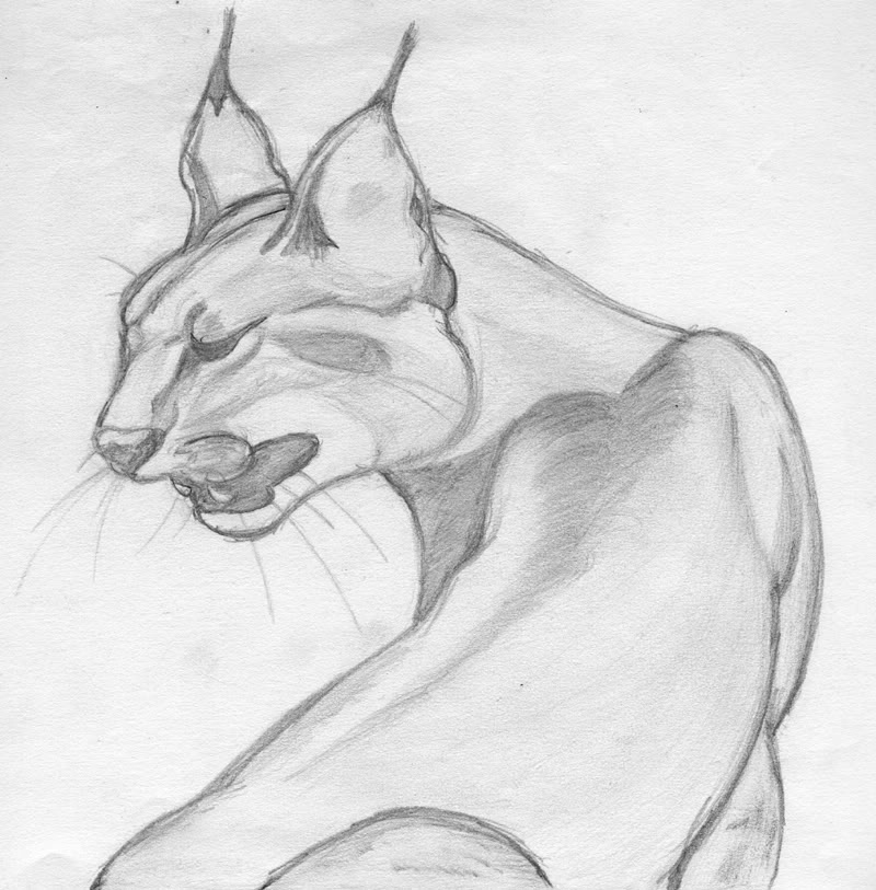Pencil drawing big cat by fanimation