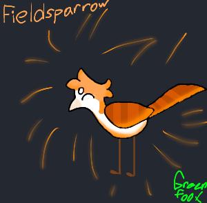 Fieldsparrow