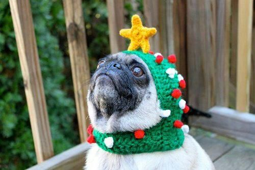 Festive-christmas-pug-1353963806 B by saniika