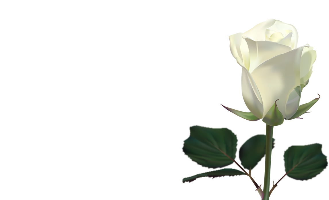 white rose backgrounds wallpapers - photo #46