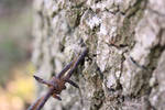 Barbed Wire Tree by Hazza42