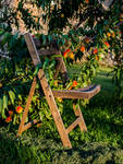 Fruit in the Chair