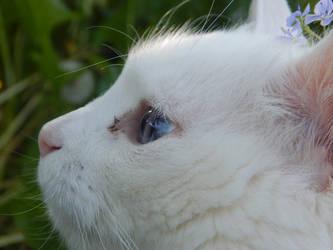 Almond and Cornflower blue