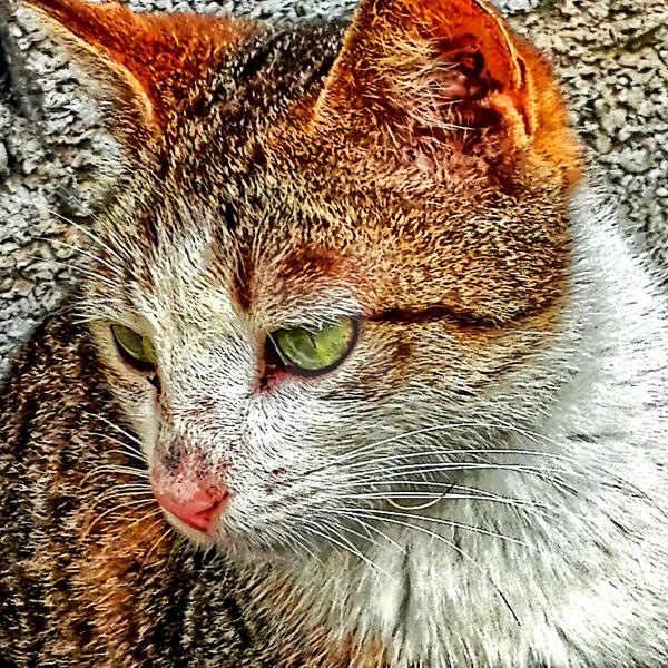 my cat by Manizhe-Mehr