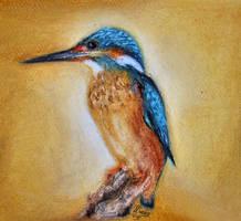 Kingfisher by sea-weed