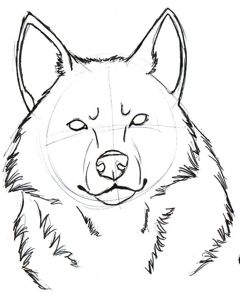 Line Drawing Wolf Head : Wolf head sketch by sparkpaw on deviantart