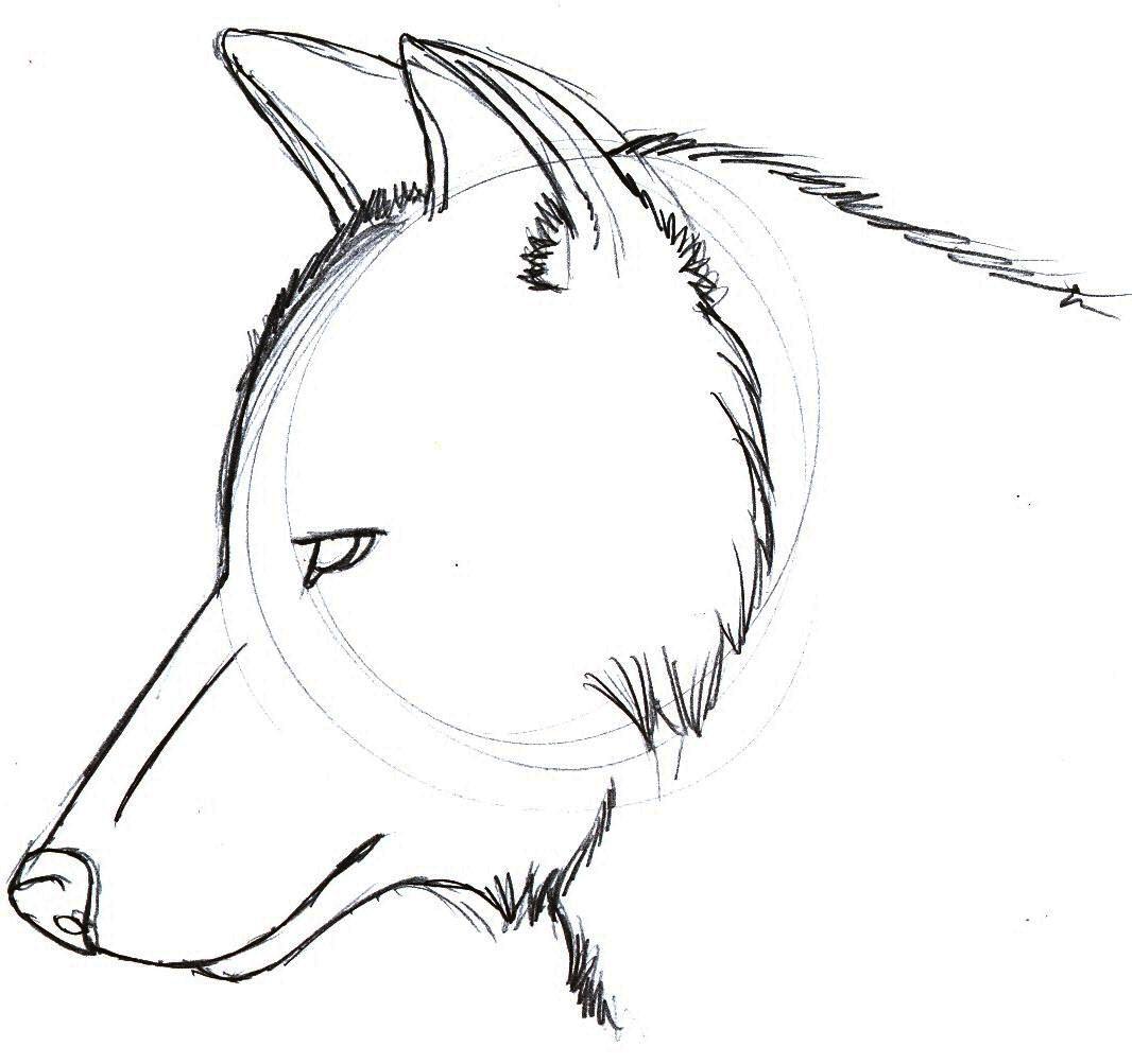 Wolf Head Sketch 2 by sparkpaw on DeviantArt Easy Wolf Head Drawing