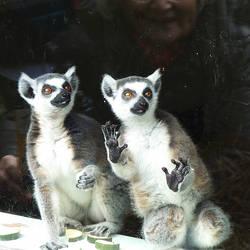 29-3-2014 Edinburgh Zoo 3