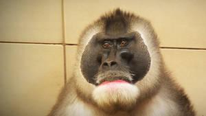 29-3-2014 Edinburgh Zoo 16
