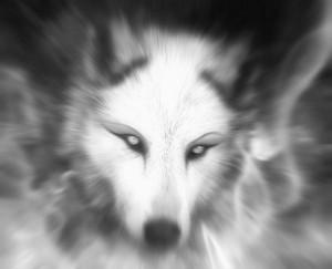 SilverRabbits's Profile Picture