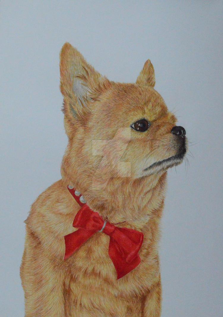 My dog drawing [Nika] by AngelInTheHeart