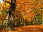 On a Autumn Leaf Carpet
