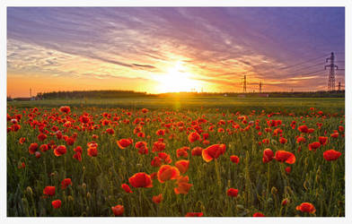 Goodnight Red Poppies by rekokros