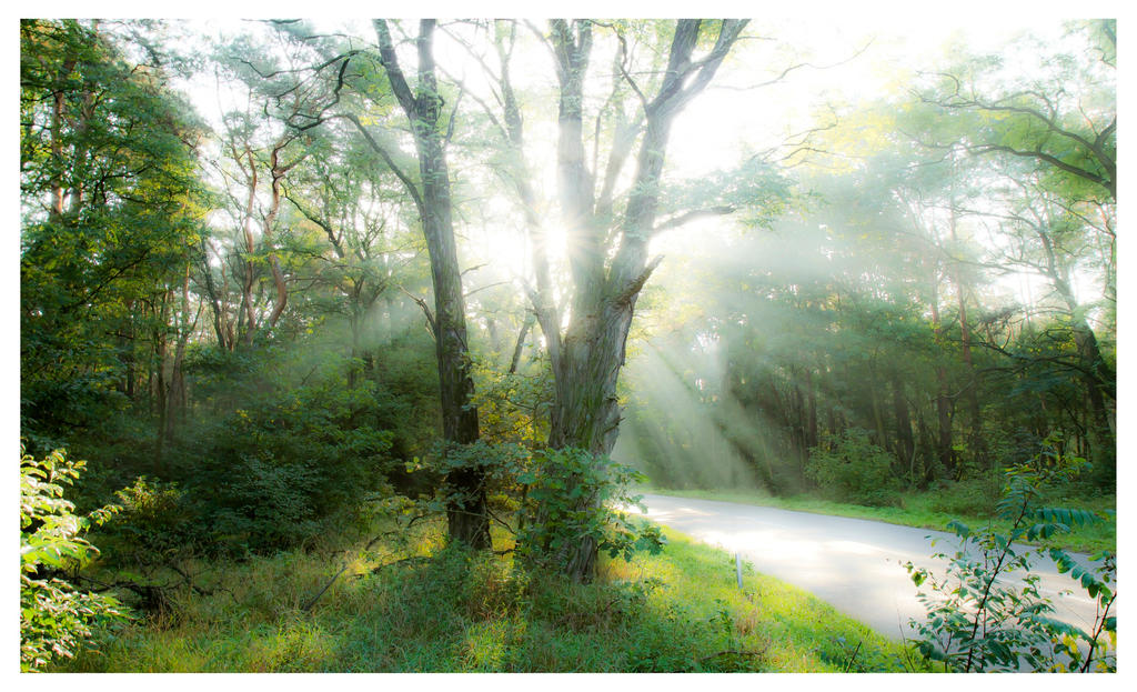 Morning Hello Rays by rekokros