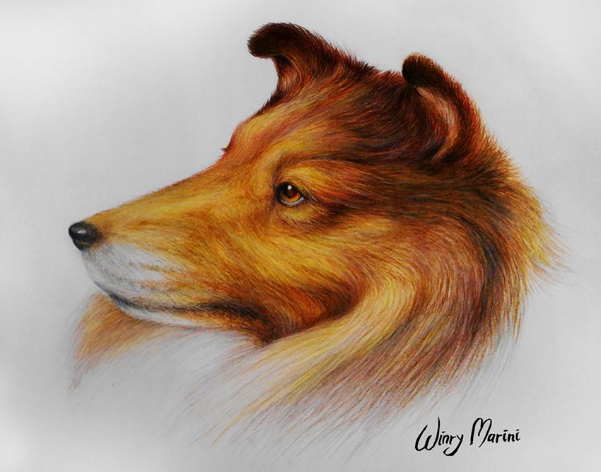Rough Collie by winrymarini