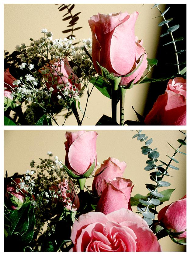 Las Rosas de Amor. by lustdrunk