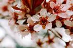 Untitled Flowers I